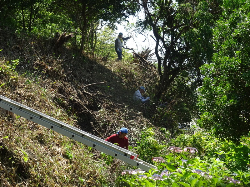 崖っぷちの斜面に植樹しました in うみべの森_c0108460_22473915.jpg