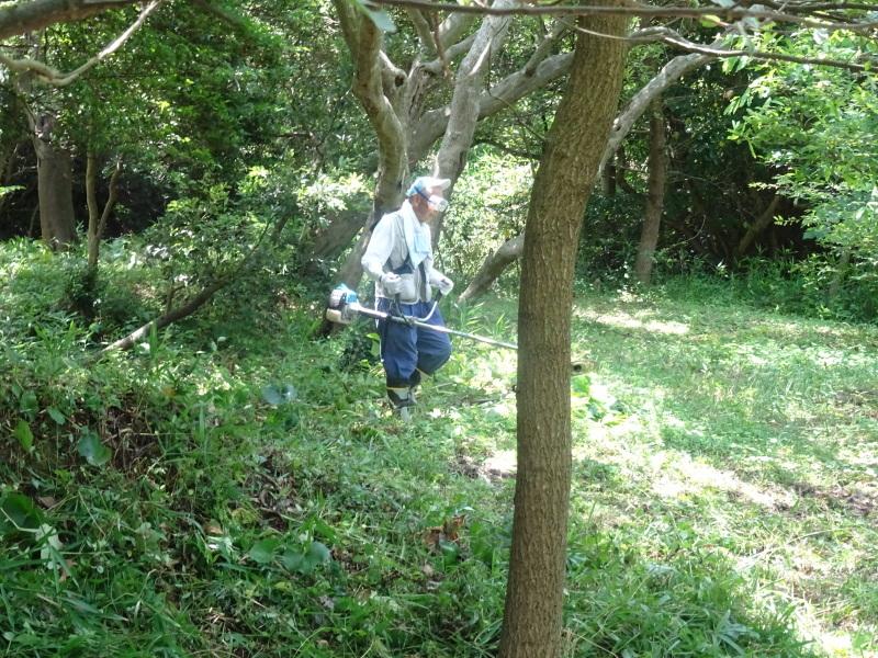 崖っぷちの斜面に植樹しました in うみべの森_c0108460_22474256.jpg