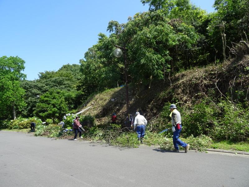 崖っぷちの斜面に植樹しました in うみべの森_c0108460_22535495.jpg