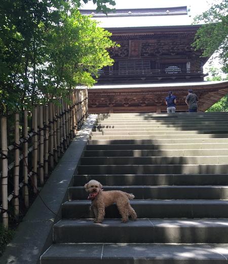 バンビと鎌倉_a0109467_2020435.jpg