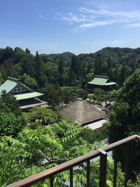 バンビと鎌倉_a0109467_2038824.jpg