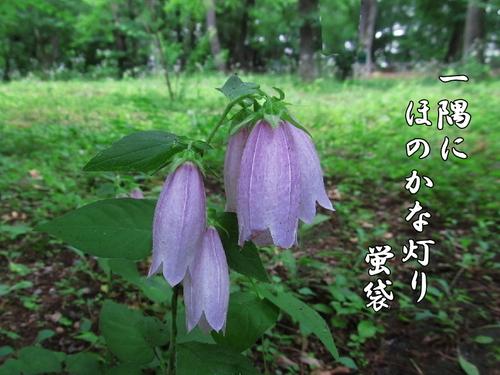 f0137096_13191392.jpg