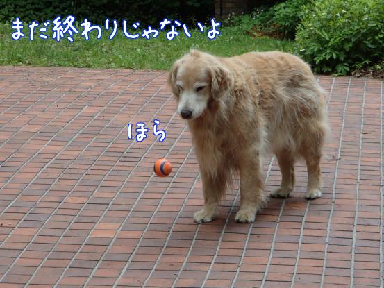 f0064906_17583444.jpg