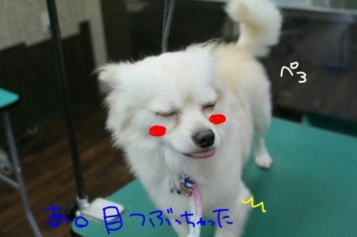 b0130018_20520498.jpg