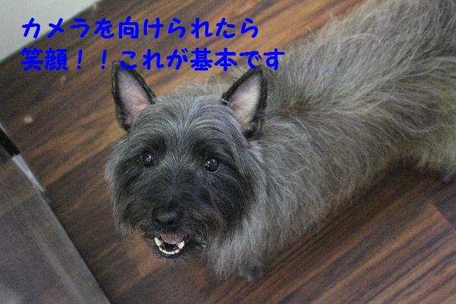 b0130018_2317991.jpg