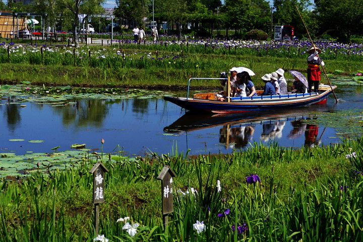 千葉県香取市佐原 「水生植物園 アヤメ祭り」(2)_d0106628_04461078.jpg