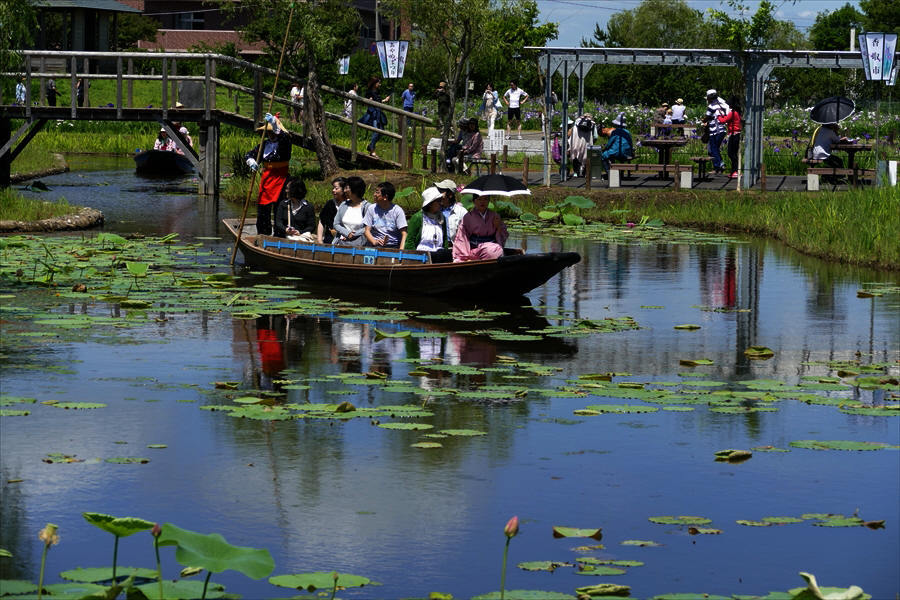 千葉県香取市佐原 「水生植物園 アヤメ祭り」(2)_d0106628_04462932.jpg