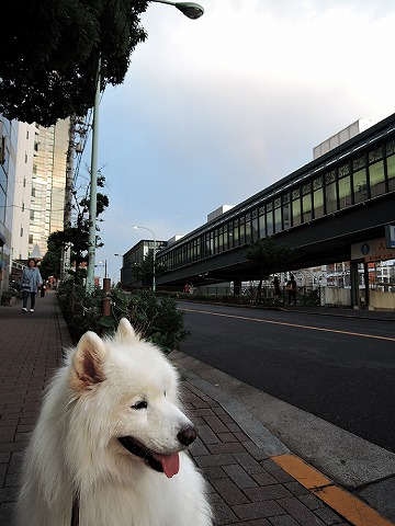 日曜おじ散歩_c0062832_8401556.jpg