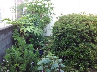 草刈り、剪定、除草剤散布_c0186441_19033896.jpg