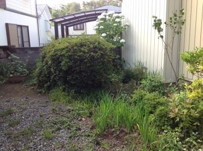 草刈り、剪定、除草剤散布_c0186441_19040952.jpg