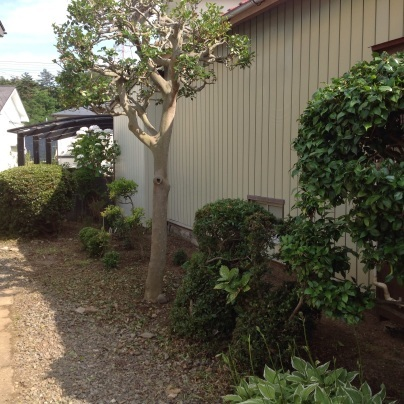 草刈り、剪定、除草剤散布_c0186441_19075936.jpg