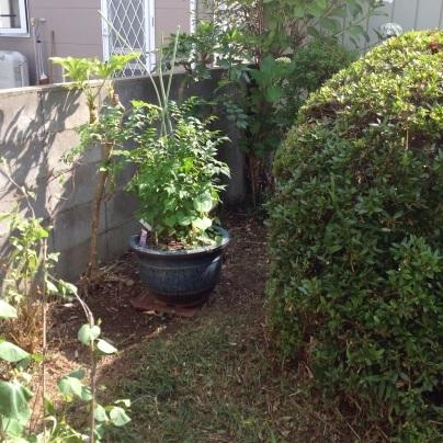 草刈り、剪定、除草剤散布_c0186441_19084527.jpg