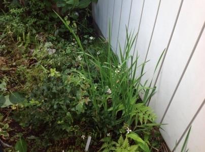 草刈り、剪定、除草剤散布_c0186441_19132629.jpg