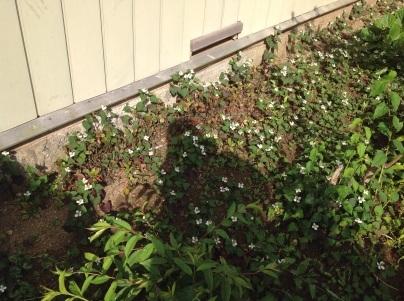 草刈り、剪定、除草剤散布_c0186441_19141354.jpg