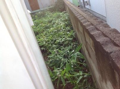 草刈り、剪定、除草剤散布_c0186441_19201529.jpg