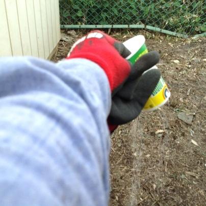 草刈り、剪定、除草剤散布_c0186441_19254767.jpg