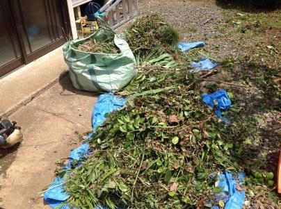 草刈り、剪定、除草剤散布_c0186441_19263993.jpg