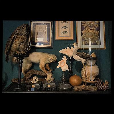 NEW ARRIVAL 「フクロウの剥製」_f0247848_17225763.jpg
