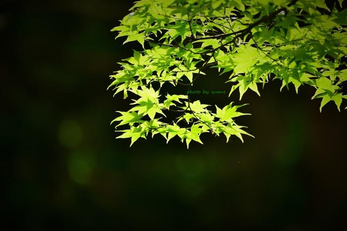 いつもの森で・・・_a0322950_19265960.jpg