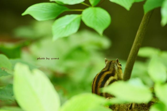 いつもの森で・・・_a0322950_1937322.jpg