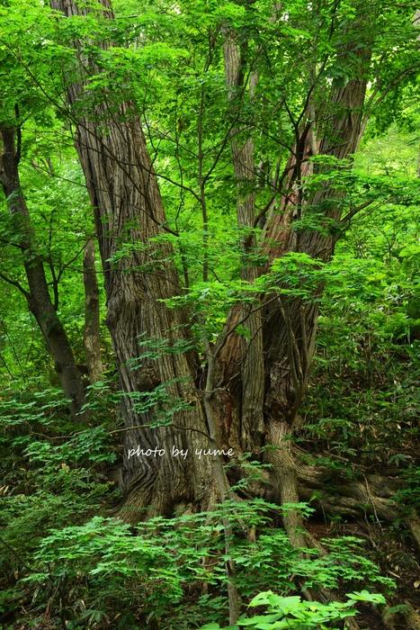 いつもの森で・・・_a0322950_1938562.jpg