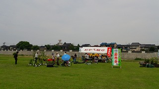 2015年 花菖蒲祭り_c0208355_1535741.jpg