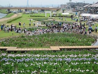 2015年 花菖蒲祭り_c0208355_16482738.jpg