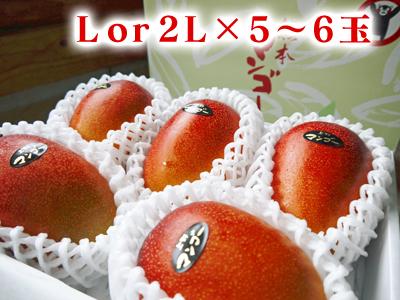 完熟アップルマンゴー 完熟マンゴーへのこだわりと発送日について!_a0254656_1910951.jpg