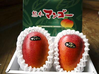 完熟アップルマンゴー 完熟マンゴーへのこだわりと発送日について!_a0254656_1914249.jpg
