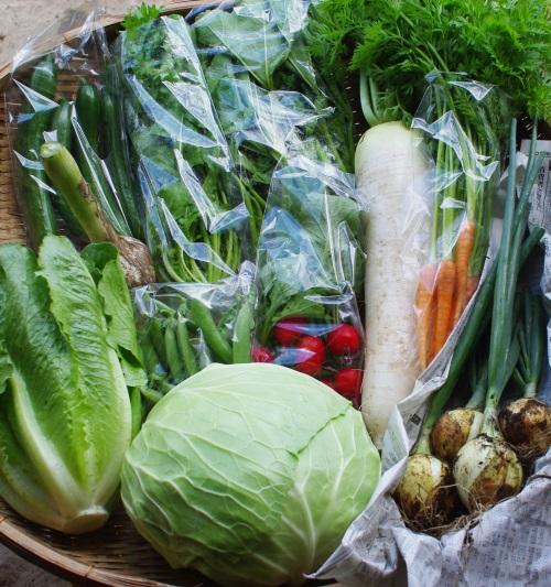 今週の野菜セット(6/23~6/27着)_c0110869_124206.jpg