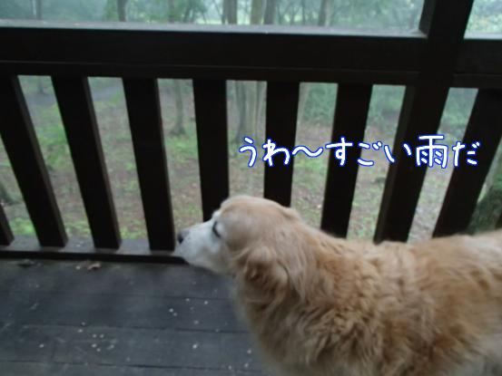 猛烈な雷雨_f0064906_17233256.jpg
