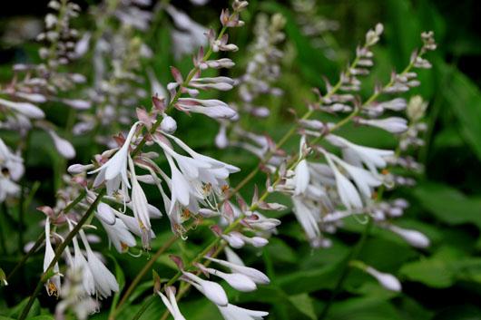 花たち_e0048413_18523311.jpg