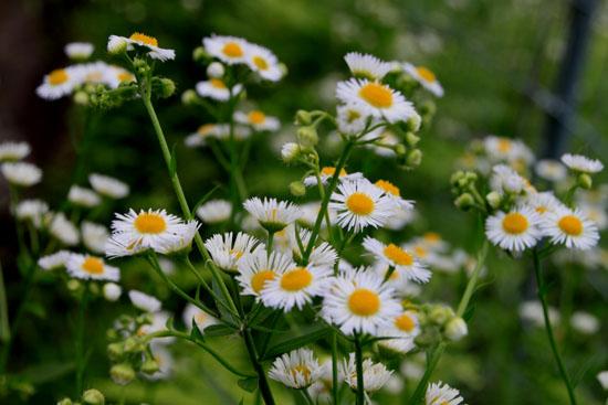 花たち_e0048413_18573151.jpg