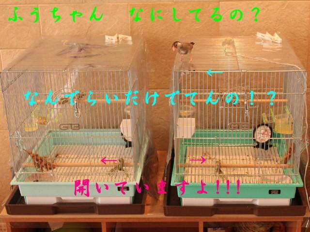 c0365734_21241530.jpg