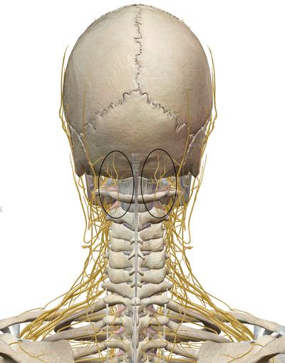 首(頸椎)の調整例_e0073240_21375167.jpg