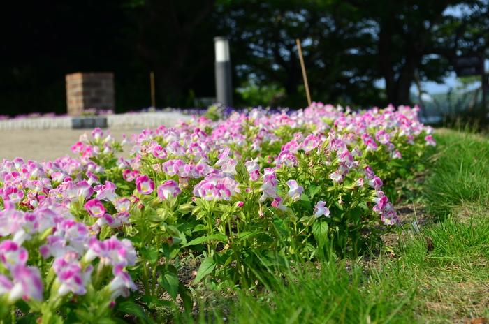 """""""彫刻と湖と花~ときわ公園をプチ散歩""""_d0153941_18132964.jpg"""