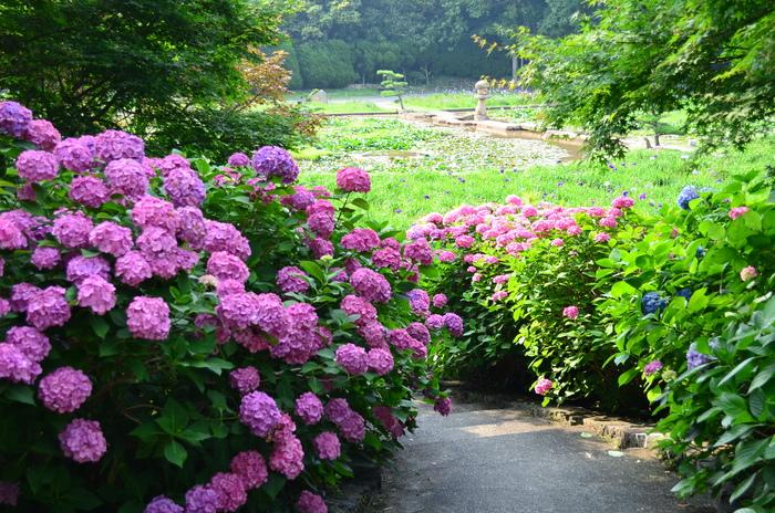 """""""彫刻と湖と花~ときわ公園をプチ散歩""""_d0153941_1852587.jpg"""