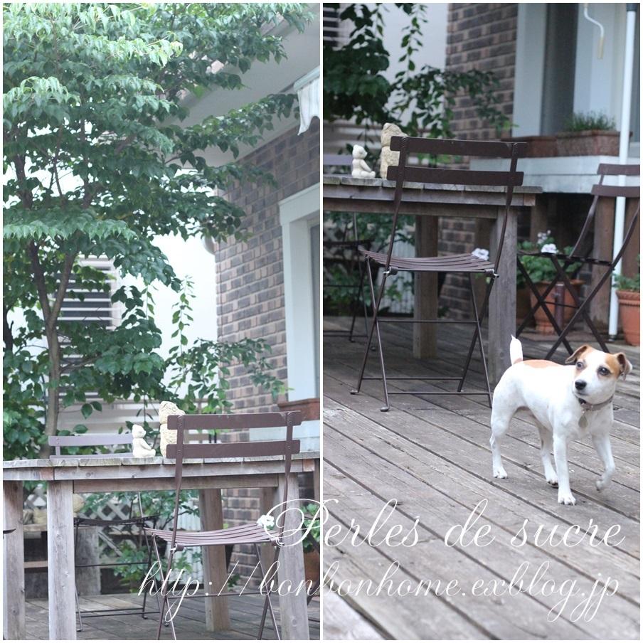 庭とノエルとあじさいとおやつ_f0199750_18265993.jpg