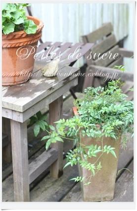 庭とノエルとあじさいとおやつ_f0199750_18271319.jpg
