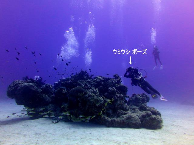 6月22日 ダンヌドロップ・祖納沖・風車_d0113459_21351626.jpg