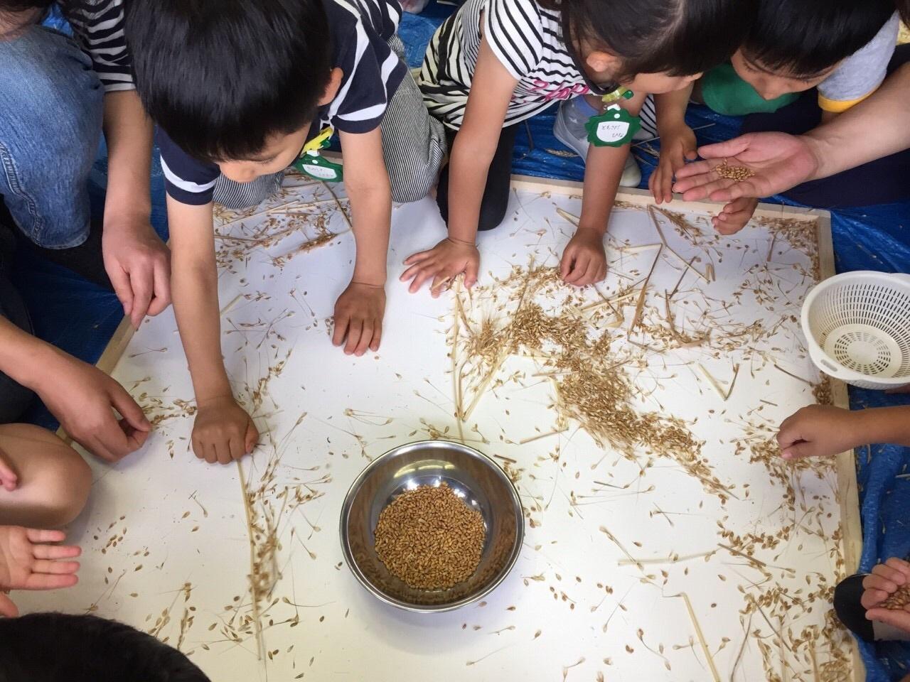 育てた小麦でクッキー作り_f0324461_02025785.jpg