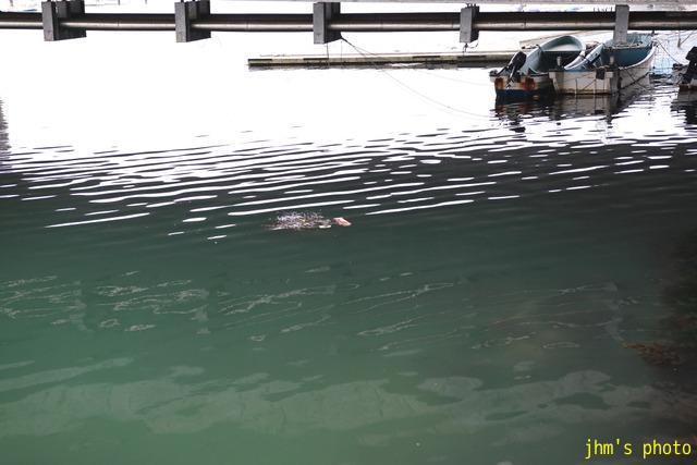 私にとっての函館の海の原風景_a0158797_2385092.jpg