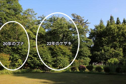 アトリエのブナは20年_e0054299_14590324.jpg