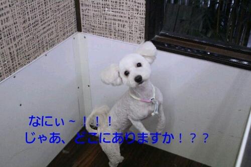 b0130018_13455311.jpg