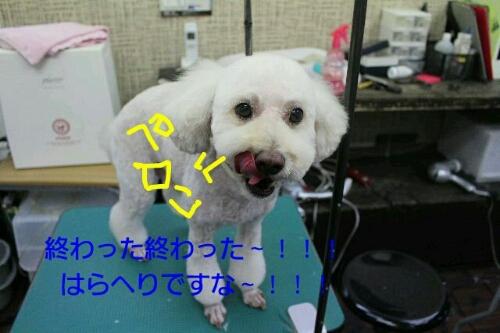 b0130018_13565261.jpg