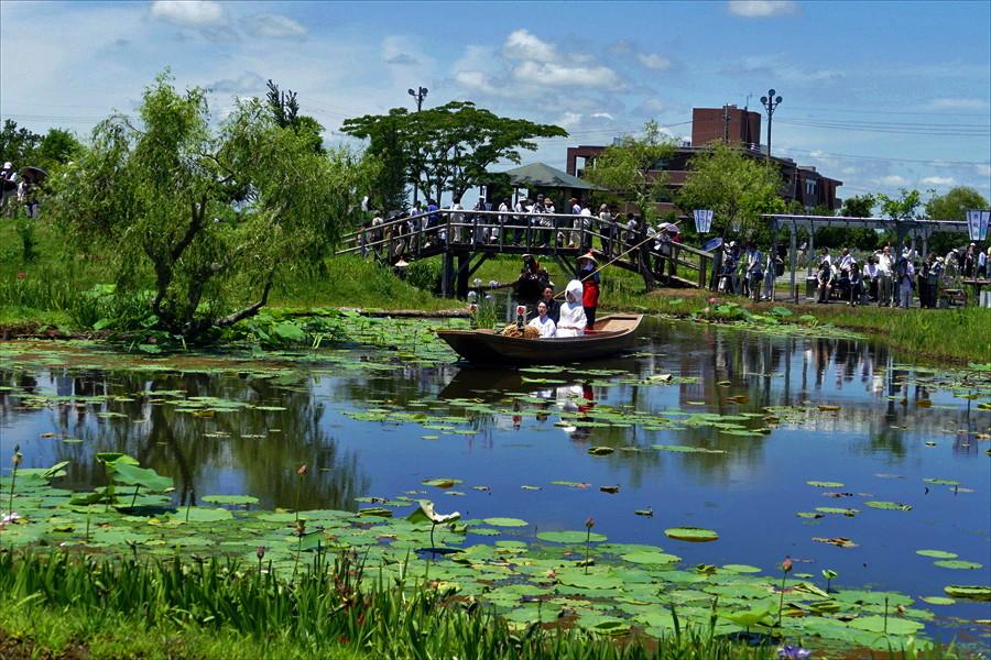 千葉県香取市佐原 「水生植物園 アヤメ祭り・嫁入り船」(4)_d0106628_04323130.jpg