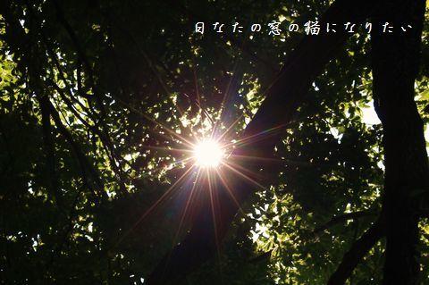 c0360539_14244222.jpg