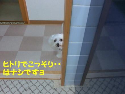 b0193480_15395887.jpg