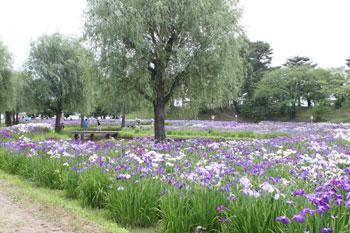 花しょうぶ祭りを見てきました! by ぐるっと会津_d0250986_7424993.jpg