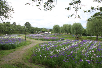 花しょうぶ祭りを見てきました! by ぐるっと会津_d0250986_742507.jpg